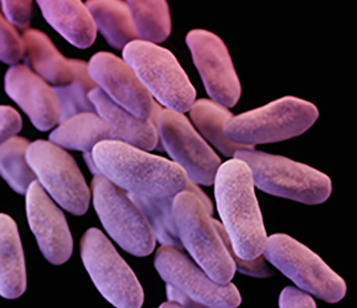 Carbapenem-resistant Enterbacteriaceae. Photo Credits: Center for Disease Control and Prevention.