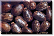 Castor beans used in making ricin.  Image courtesy of USDA.